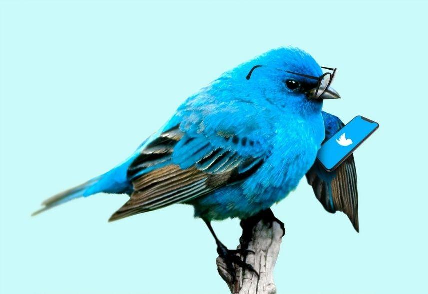 Novidades do Twitter: imagem de um pássaro azul de óculos em um galho segurando um celular com a tela do twitter aberta